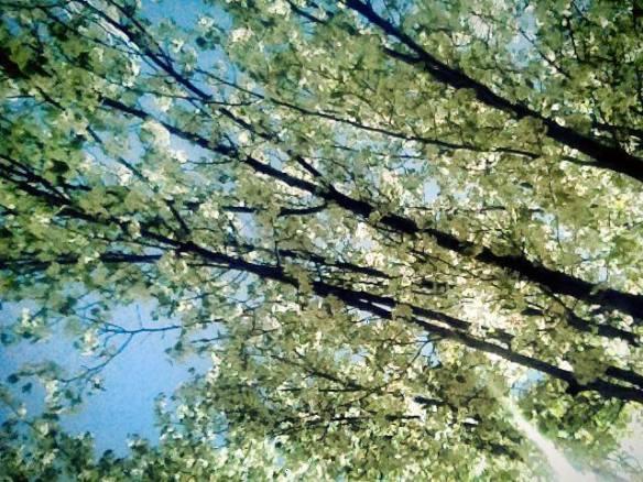 Midvale, UT + Springtime = Pretty Times